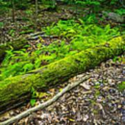 Forest Floor Gosnell Big Woods Art Print