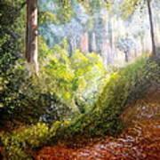 Forest Glade Art Print by Heather Matthews