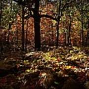 Forest Illuminated Print by Linda Unger