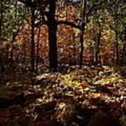 Forest Illuminated Art Print
