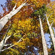 Forest In Autumn Bavaria Art Print