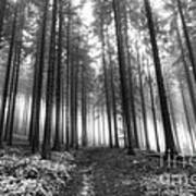 Forest In The Mist Art Print