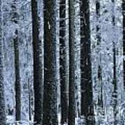 Forest In Winter Art Print by Bernard Jaubert
