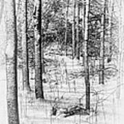 Forest In Winter Print by Tom Mc Nemar