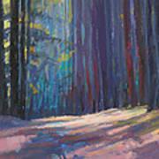 Forest Light Art Print by Ed Chesnovitch