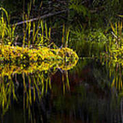 131005b-044 Forest Marsh 1 Art Print