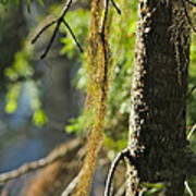 Forest Moss Art Print