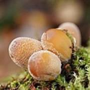 Forest Mushrooms Art Print