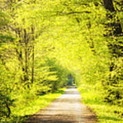 Forest Path In Spring With Bright Green Trees Art Print