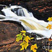 Forest River In The Fall Art Print by Elena Elisseeva