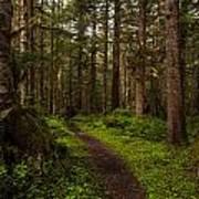 Forest Serenity Path Art Print