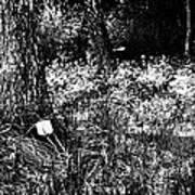 Forest Socket Art Print