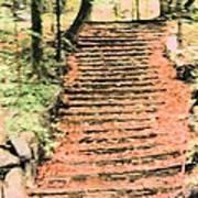 Forest Steps Art Print