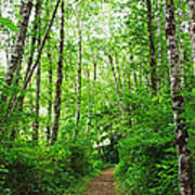Forest Trail To Follow Art Print