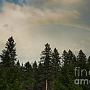 Forest Under The Rainbow Art Print
