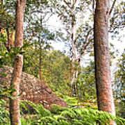 Forest Walk 16 Art Print