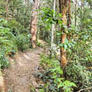 Forest Walk 17 Art Print