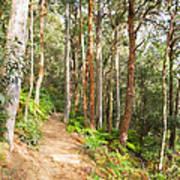Forest Walk 19 Art Print
