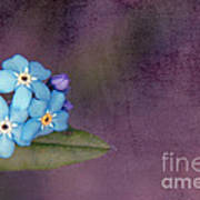Forget Me Not 02 - S0304bt02b Art Print