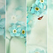 Forget Me Not..... Art Print