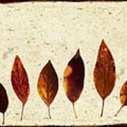 Forsythia Leaves In Fall Art Print