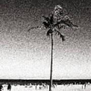 Fort Lauderdale Palm Tree Art Print