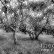 Fort Ord Ca Oaks Art Print