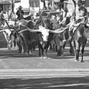 Fort Worth Herd Cattle Drive Art Print