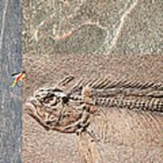 Fossil Fishing Art Print