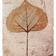 Fossil Leaf Art Print