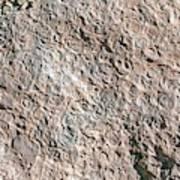 Fossiliferous Limestone Art Print