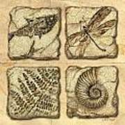 Fossils Art Print by JQ Licensing