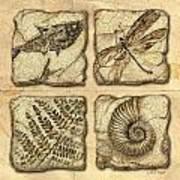 Fossils Art Print