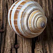 Found Sea Shell Art Print by Garry Gay