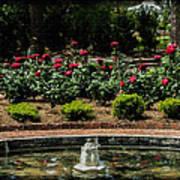 Fountain Of Roses Art Print