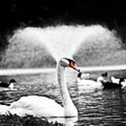 Fountain Swan Art Print