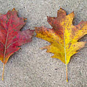 Four Autumn Leaves Art Print