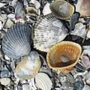 Four Beautiful Shells Art Print