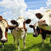 Four Chatting Cows Art Print