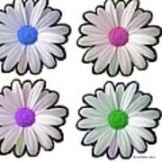 Four Daisy Hibrids Art Print