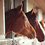 Four Horses In Stables Art Print