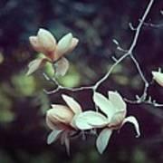 Four Magnolia Flower Art Print
