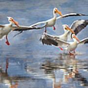Four Pelican Landing Watercolor Effect Art Print