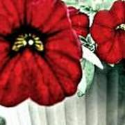 Four Petunias Hanging Art Print