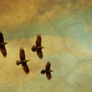 Four Ravens Flying Art Print
