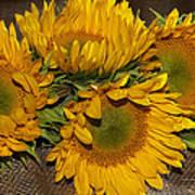 Four Sunflowers Art Print
