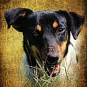 Fox Terrier Dog Art Print