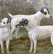 Fox Terriers Art Print