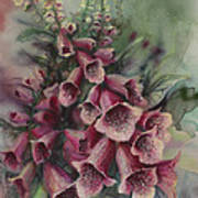 Foxgloves Art Print