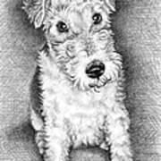 Foxterrier Art Print